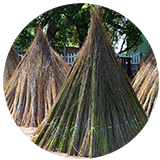 Thatching grass and Cape reed