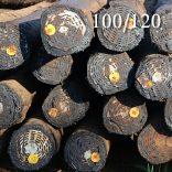 100/120 Transmission poles